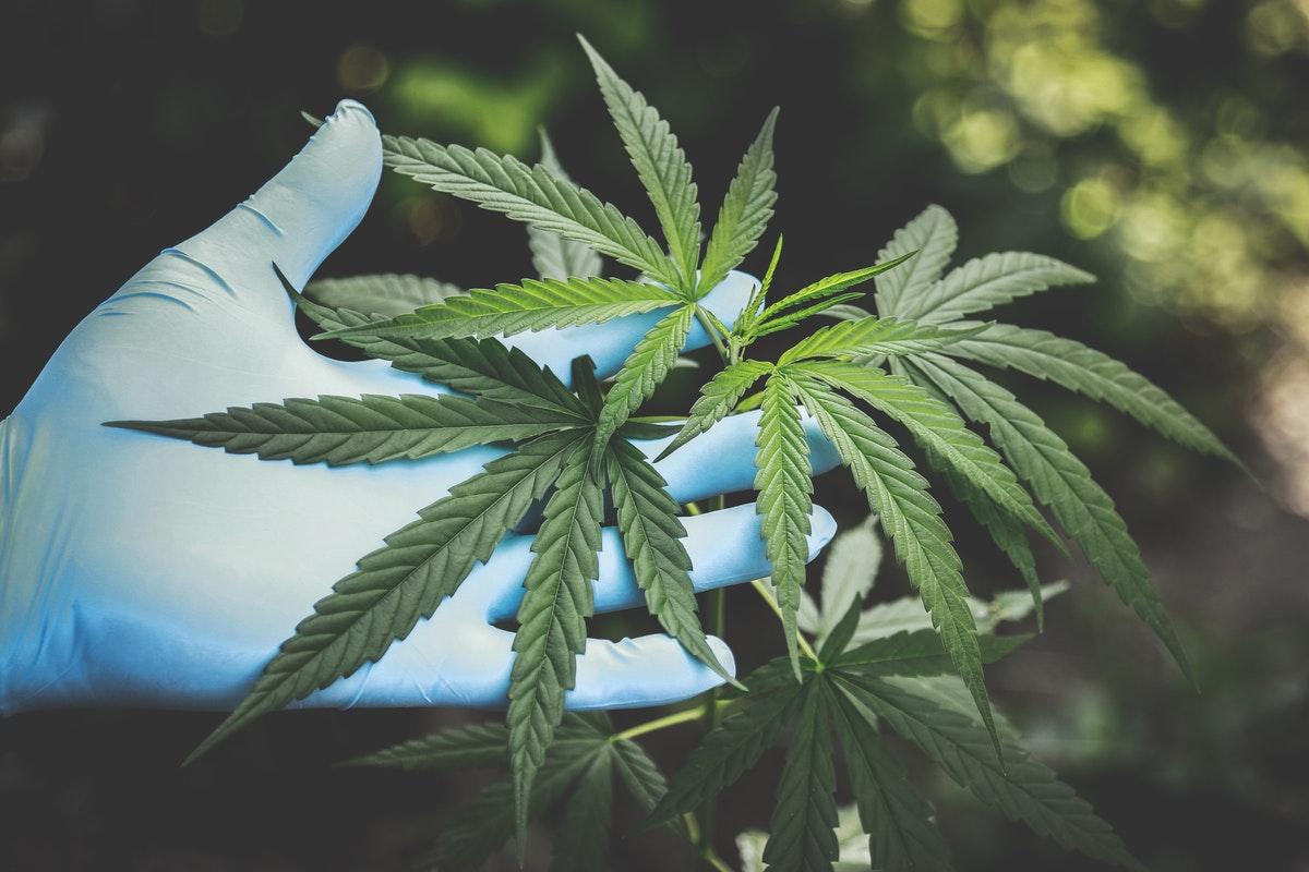 Marijuana - The Myths And Facts